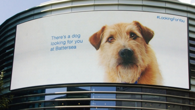 Digital Dog Follows Mall-Goers in Hopes of Finding a Home